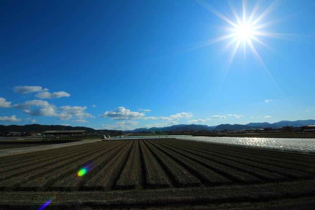 野菜の産地
