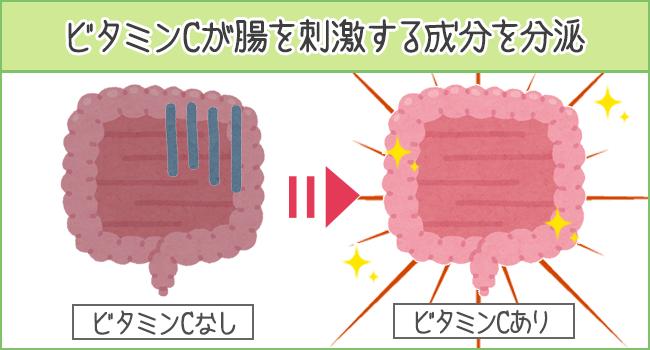 ビタミンCが腸を刺激する成分を分泌する