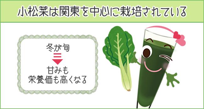 小松菜は冬が旬で、甘みも栄養価も高くなる