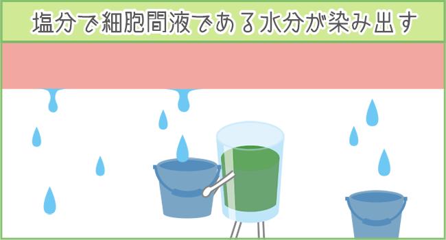 塩分を過剰摂取すると細胞間液から水分が染み出してむくみの原因に