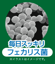フェカリス菌