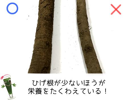 ごぼうのひげ根