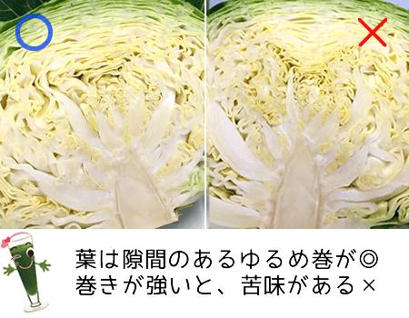 春キャベツの葉っぱの巻き