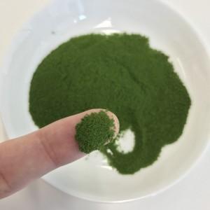 リッチグリーンの粉末を指につけて見せているところ