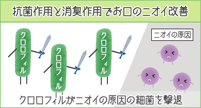 クロロフィルの抗菌作用と消臭作用で口臭予防