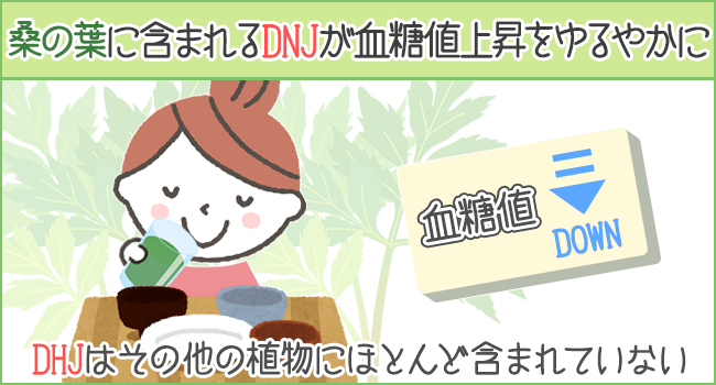桑の葉に含まれるDNJが血糖値の上昇を緩やかにしてくれる