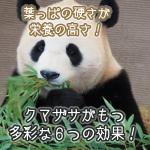 aojiru-kumazasasyusei2 (1)