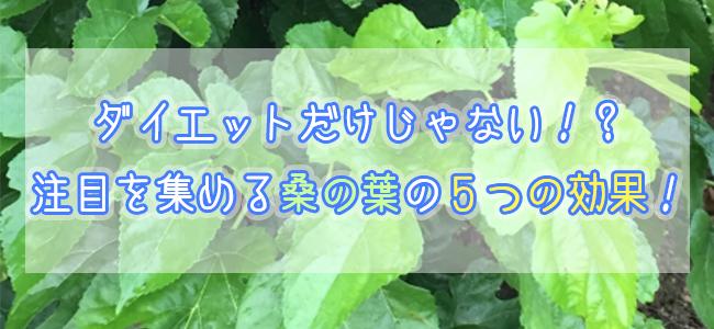 青汁の原料 桑の葉にはどんな効果がある?注目を集めている桑の葉の5つの効果!