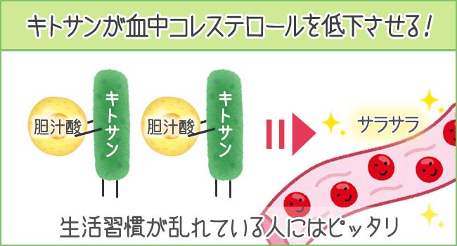 キトサンが胆汁酸を吸収して、血中コレステロールを低下させる