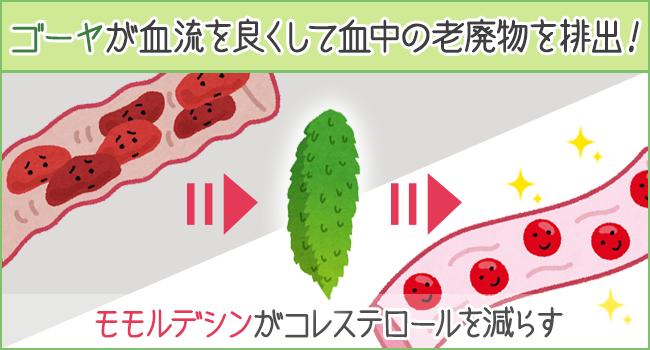 ゴーヤのはたらきで血流をよくすることで、血中の老廃物を排出