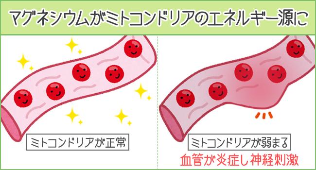 マグネシウムがミトコンドリアのエネルギー源になる