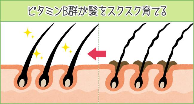ビタミンB群が髪をスクスク育てる
