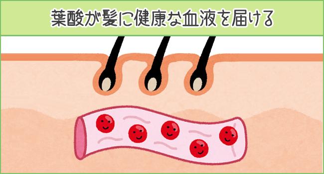 葉酸が髪に健康な血液を届ける