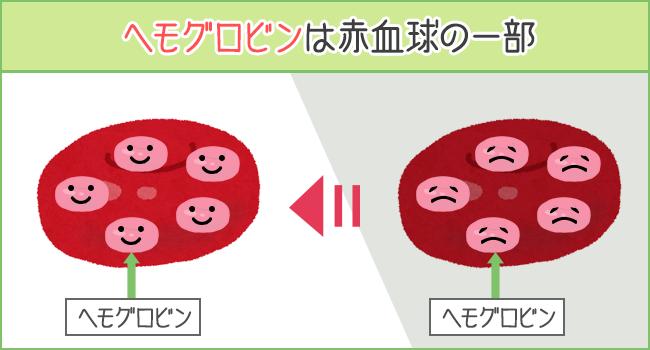 ヘモグロビンは赤血球の一部