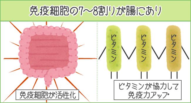 免疫細胞の7~8割りが腸にあり