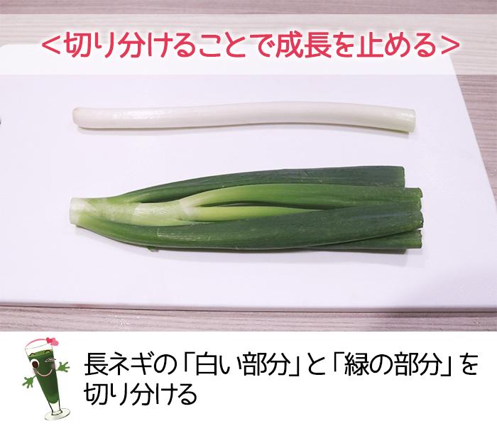 長ネギを保存する場合は白い部分と緑の部分を切りわける