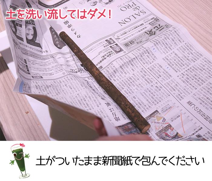 土付きごぼうはそのまま新聞紙で包んで保存する