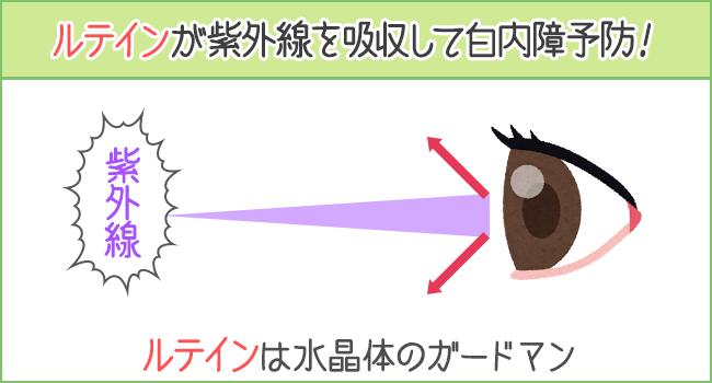 ルテインが紫外線を吸収して白内障を予防