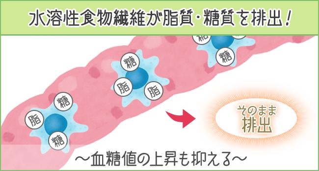 水溶性食物繊維が糖質・脂質を絡めて排出