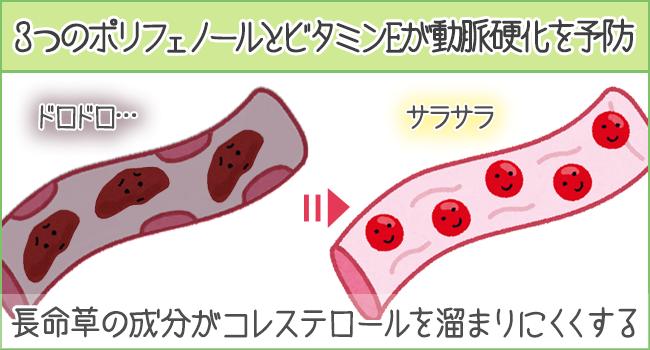 3つのポリフェノールとビタミンEが動脈硬化を予防
