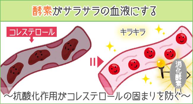 酵素がサラサラの血液にする