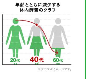 年代ごとの酵素量の変化を表したグラフ
