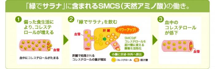 SMCSのコレステロールを下げる働き