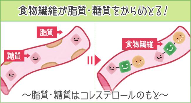 食物繊維が脂質・糖質をからめとる!