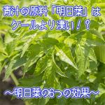 青汁の原料「明日葉」のすごい効果6つを紹介!オススメ青汁あり◎