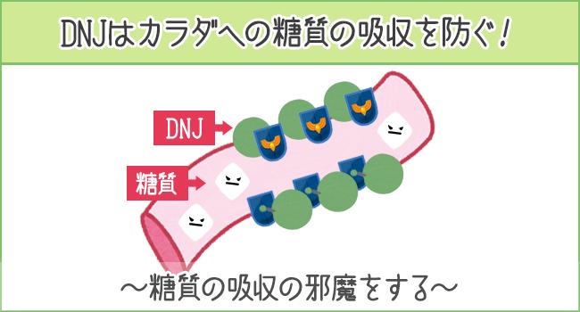 DNJがカラダへの糖質の吸収を防ぐ!