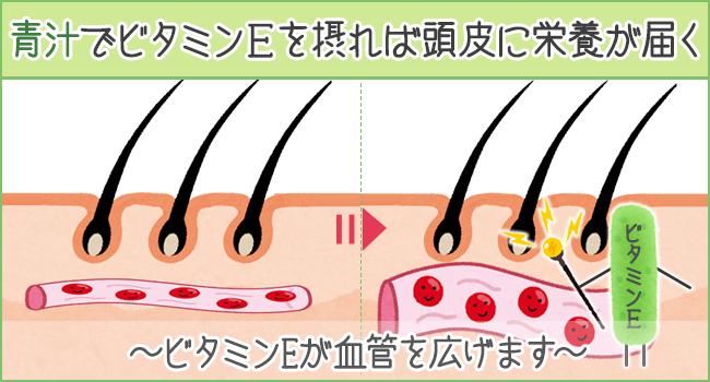 青汁でビタミンEを摂れば頭皮に栄養が届く