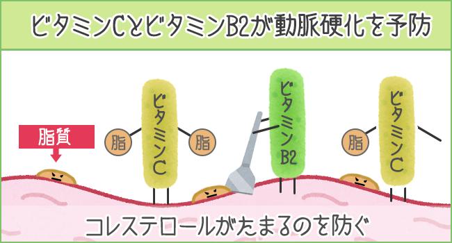 ビタミンCとビタミンB2がコレステロールが溜まるのを防ぎ動脈効果を予防