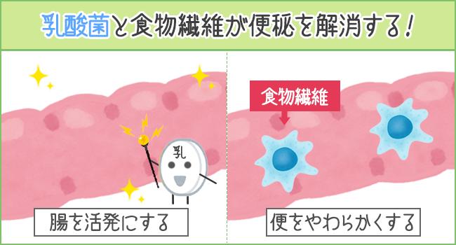 乳酸菌と食物繊維が便秘を解消する