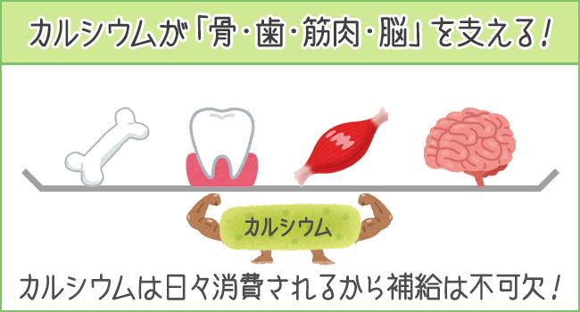カルシウムが「骨・歯・筋肉・脳」を支える!カルシウムは日々消費さらえるから補給が不可欠!
