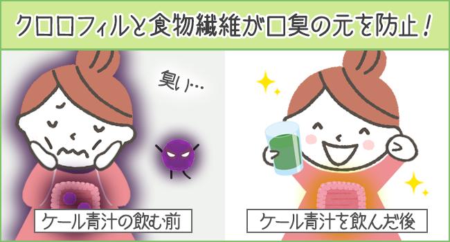 クロロフィルと食物繊維が口臭を防止!
