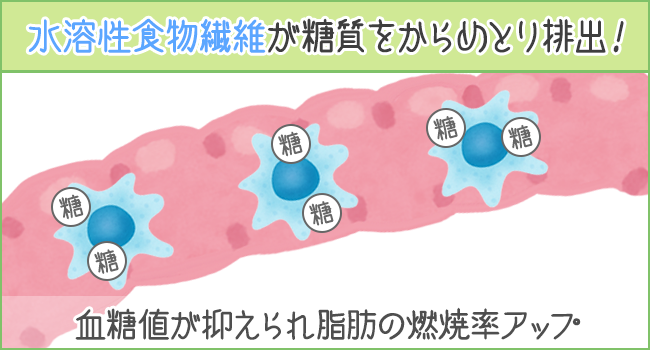 水溶性食物繊維が透湿をからめとり排出!血糖値が抑えられ脂肪の燃焼率がアップする