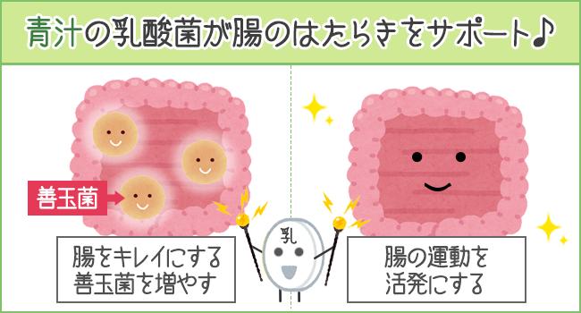 青汁の乳酸菌が腸のはたらきをサポート♪