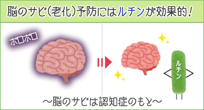 脳のサビ(老化)予防にはルチンが効果的