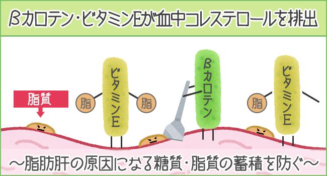 βカロテン・ビタミンEが血中コレステロールを排出する